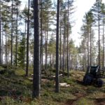 Vi i Skogen